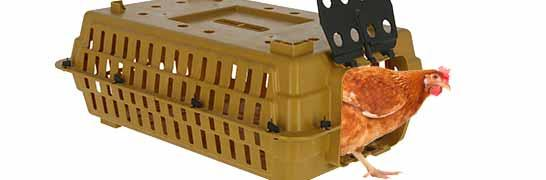 Poultry Transport Box