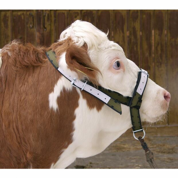 Halter leather for cows and young bulls